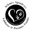 Sėkmės spindesys, labdaros ir paramos fondas logotipo