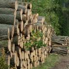 Miškų supirkimas visoje Lietuvoje, miškininkystė