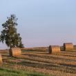"""""""INVL Baltic Farmland"""" 9 mėn. grynasis pelnas – mažesnis"""