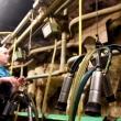 Įvardijo didžiausią pieno sektoriaus rakštį