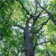 Urėdijų reforma tęsiama: Seimas pritarė Miškų įstatymo pataisoms