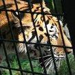 zoologijos sodo pertvarkai reikia 100 mln lt