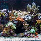 Įmonės Akvariumų studija LT nuotraukos