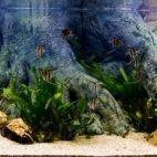 Akvariumų studija LT nuotrauka