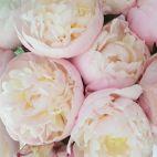 Фото Daveikla, UAB - Gėlių salonas (186193754)