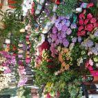 Фото компании Daveikla, UAB - Gėlių salonas
