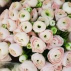 Daveikla, UAB - Gėlių salonas nuotrauka