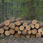 Фото компании EMG FOREST