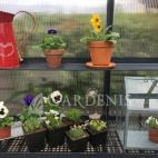Gardenis