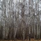 Įmonė apima beveik visas miškininkystės