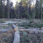 miškininkystės perkame medienos