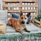 Vilniuje veiklą vykdanti gyvūnų globos
