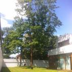 Medžių priežiūra, UAB nuotrauka