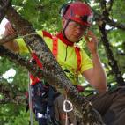 Medžių priežiūra nuotrauka