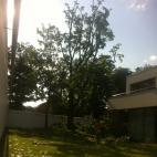 Foto Medžių priežiūra, UAB (303536401)