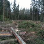 Įmonės Miško ranga, UAB nuotraukos