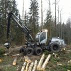miško medienos pirkimas