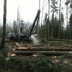 Miškininkystė, žaliavinės medienos