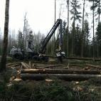 Įmonės Miško ranga nuotraukos