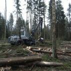 Miško ranga, UAB nuotrauka