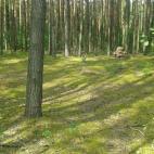 Miško sprendimai