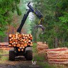 Miškų fondas nuotrauka