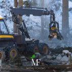 Miškų fondas