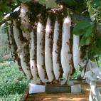 Photo R. Šemeklio bitininkystės ūkis (2222222)