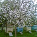 Įmonės R. Šemeklio bitininkystės ūkis nuotraukos