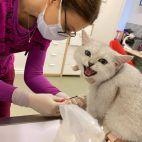 gyvūnų tyrimai veterinarijos