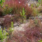 Savos girios nuotrauka
