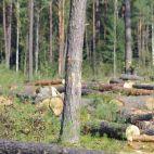 Įmonės Savos girios nuotraukos