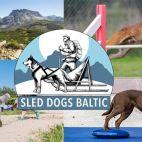 Sled dogs Baltic company photos