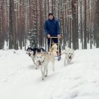Sled dogs Baltic nuotrauka
