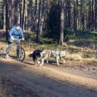Foto Sled dogs Baltic (302604155)