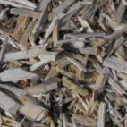 Auginame gluosnius biokurui. Esame
