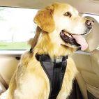 Foto Panemunės veterinarija (302298413)