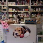 Įmonės Panemunės veterinarija nuotraukos