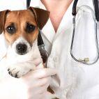 Panemunės veterinarija nuotrauka