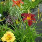Photo Žiežmarių Gėlių Prekyba, UAB (302452594)
