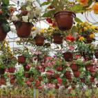 Žiežmarių Gėlių Prekyba company photos