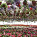 Žiežmarių Gėlių Prekyba picture