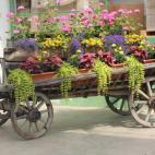 Žiežmarių Gėlių Prekyba, UAB picture